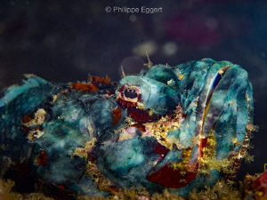 Blue Scorpion by Philippe Eggert